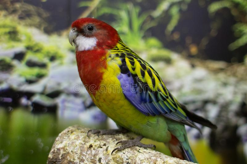 Exotic parrot from the tropics stock images