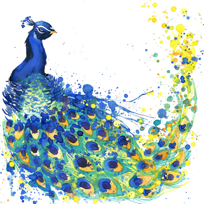Exotic peacock T-shirt graphics. peacock illustration with splash watercolor textured background. unusual illustration watercolor royalty free stock photo
