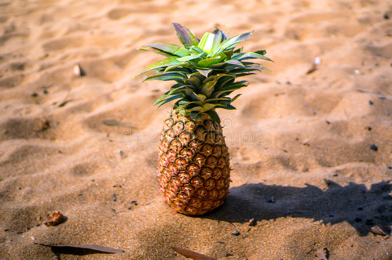 Exotic Pineapple fruit symbol of summer standing in beach sand stock photo