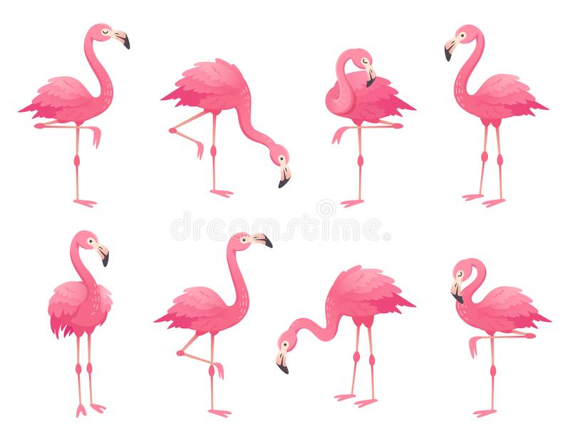 Exotic pink flamingos birds. Flamingo with rose feathers stand on one leg. Rosy plumage flam bird cartoon vector. Exotic pink flamingos birds. Flamingo with rose stock illustration