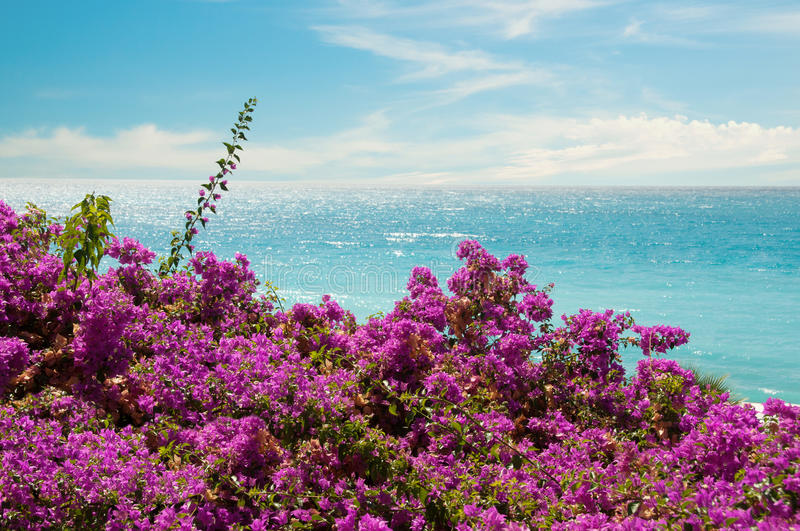 Exotic pink flowers and sea royalty free stock images