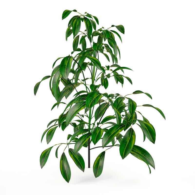 Exotic plant bush tree vector illustration