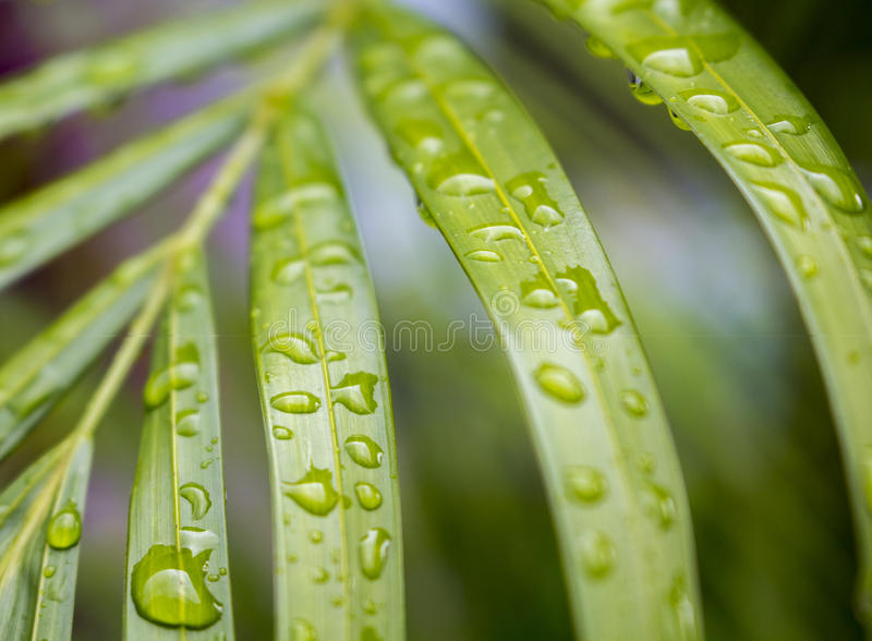 Exotic plant leaf macro photo with rain water drops stock photos