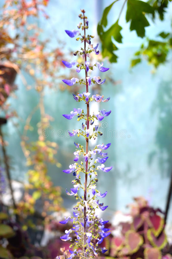 Download Exotic Plant Stock Photos - Image: 31918533