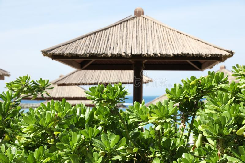 Exotic plants and beach umbrellas at tropical resort. On sunny day royalty free stock photography