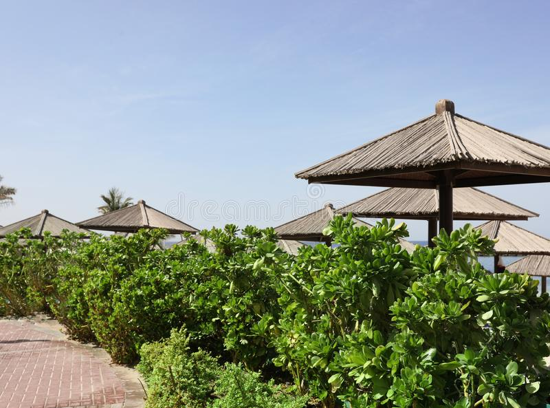 Exotic plants and beach umbrellas at tropical resort. On sunny day stock photo