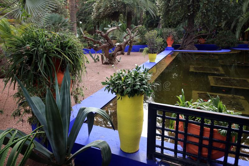Exotic plants in the garden of Majorelle. In Marrakech royalty free stock photography