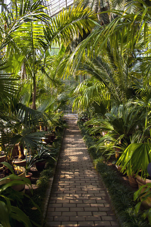 Download Exotic plants stock image. Image of plant, glasshouse - 31492575