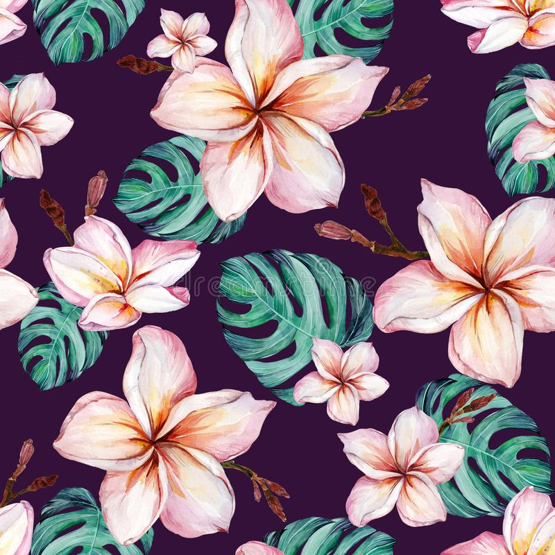 Exotic plumeria flowers and green monstera leaves in seamless tropical pattern. Deep purple background, vivid colors. Watercolor painting. Hand painted floral royalty free illustration