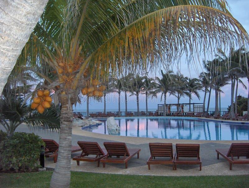 Download Exotic pool stock image. Image of ocean, trees, water - 23533133