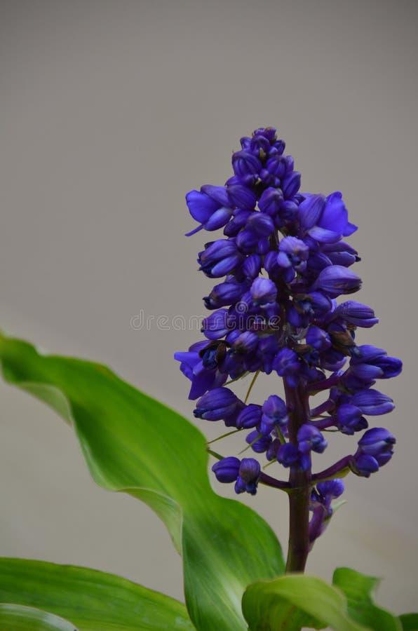 Exotic purple flower royalty free stock image
