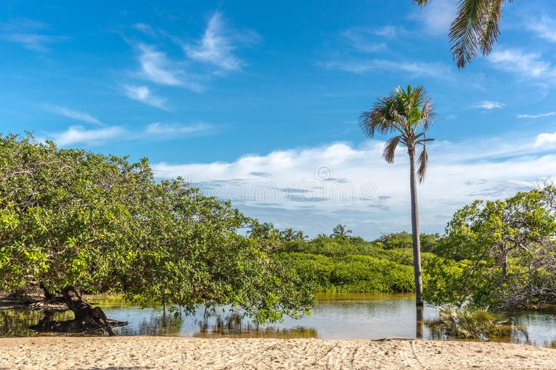 Exotic scenario with palm trees, rivers and white sand in a blue sky day. Exotic destination in north Brazil, South America. stock photo