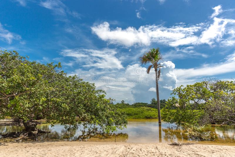 Exotic scenario with palm trees, rivers and white sand in a blue sky day. Exotic destination in north Brazil, South America. royalty free stock photo