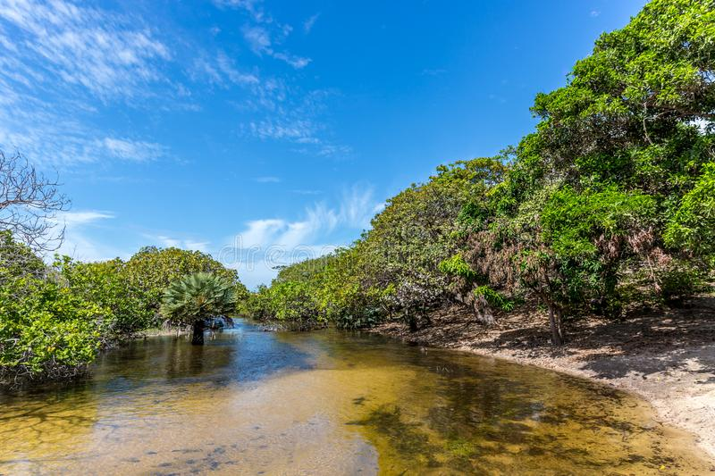Exotic scenario with trees, clear river and sand in a blue sky day. Exotic destination in north Brazil, South America. stock image