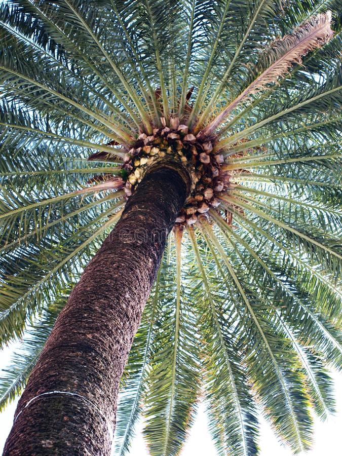 Download Exotic scenery- palm II stock image. Image of beach, leaf - 14386555