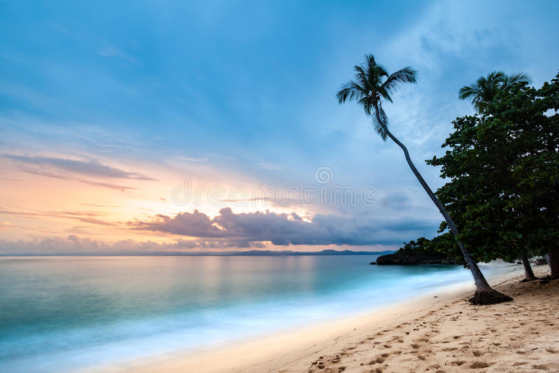 Exotic seascape with a palm tree leaning above the sea stock photos