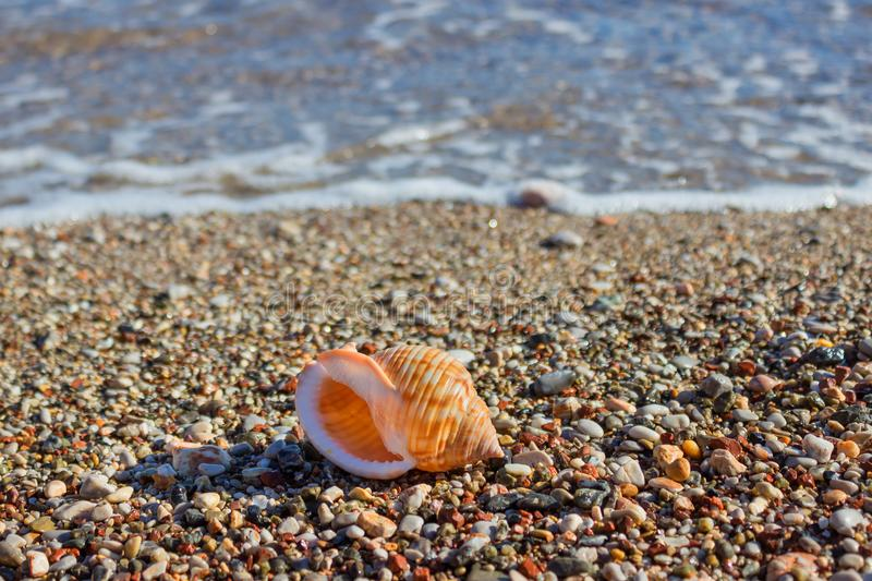 Exotic shell in the sand on the beach. Waves with foam blue sea stock images