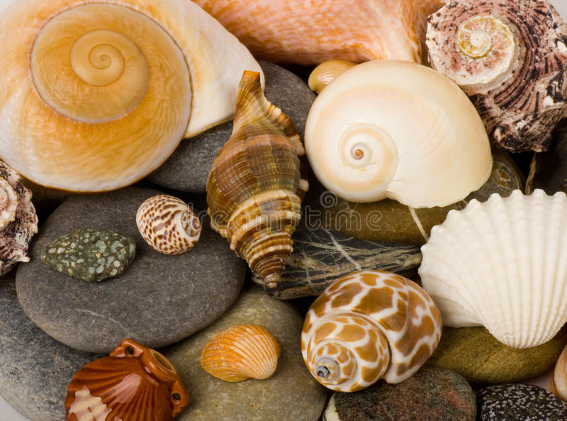 Download Exotic Shell And Stones Royalty Free Stock Photos - Image: 23825458