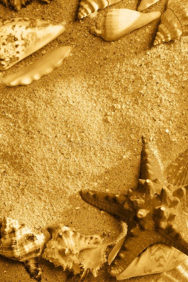 Exotic Shells royalty free stock photos