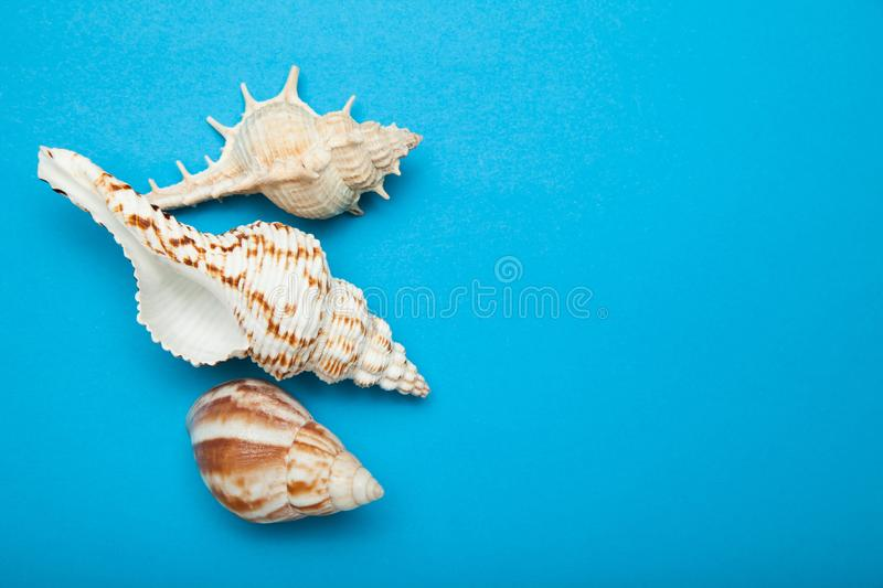 Exotic shells on a blue background, the concept of summer holidays. Copy space royalty free stock images