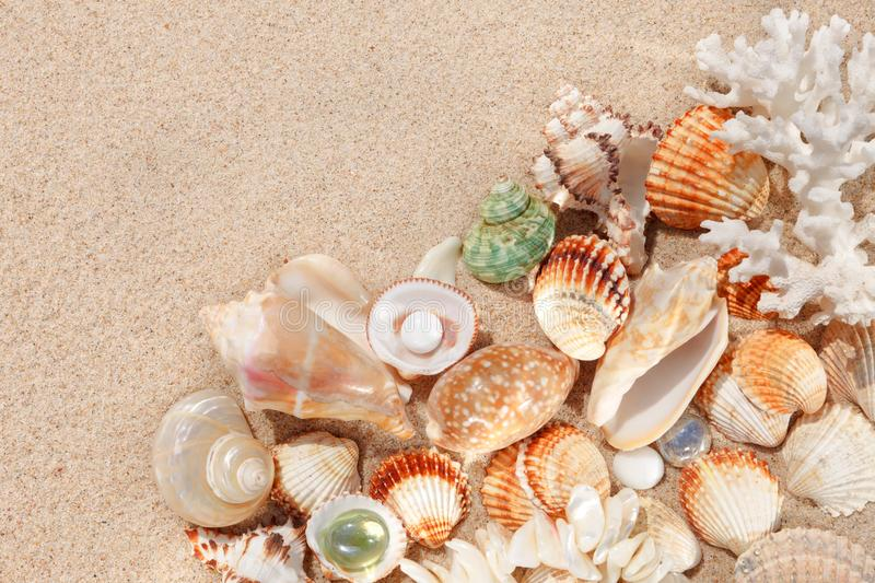 Exotic shells and corals in the sand. Summer beach vacation concept. stock image