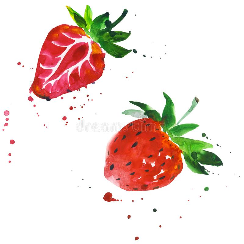 Exotic strawberry wild fruit in a watercolor style isolated. vector illustration