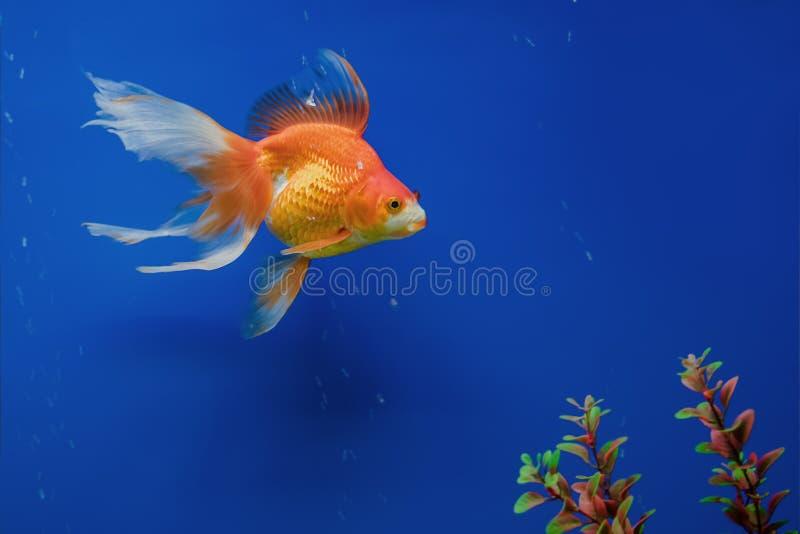 Exotic Tropical coral fish environment of the aquarium royalty free stock image