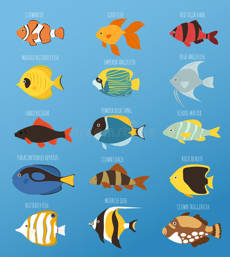 Exotic tropical fish race different breed colors underwater ocean species aquatic strain nature flat vector illustration royalty free illustration