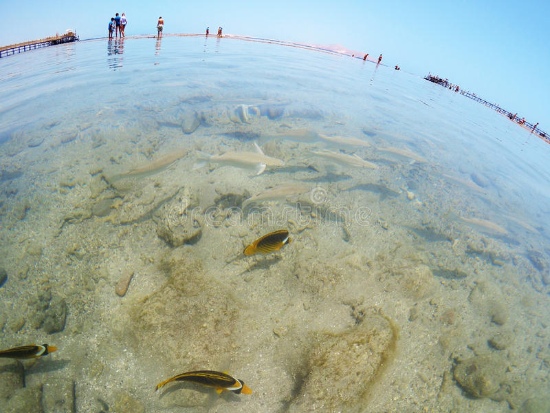 Exotic tropical fish in sea near the shore stock photo