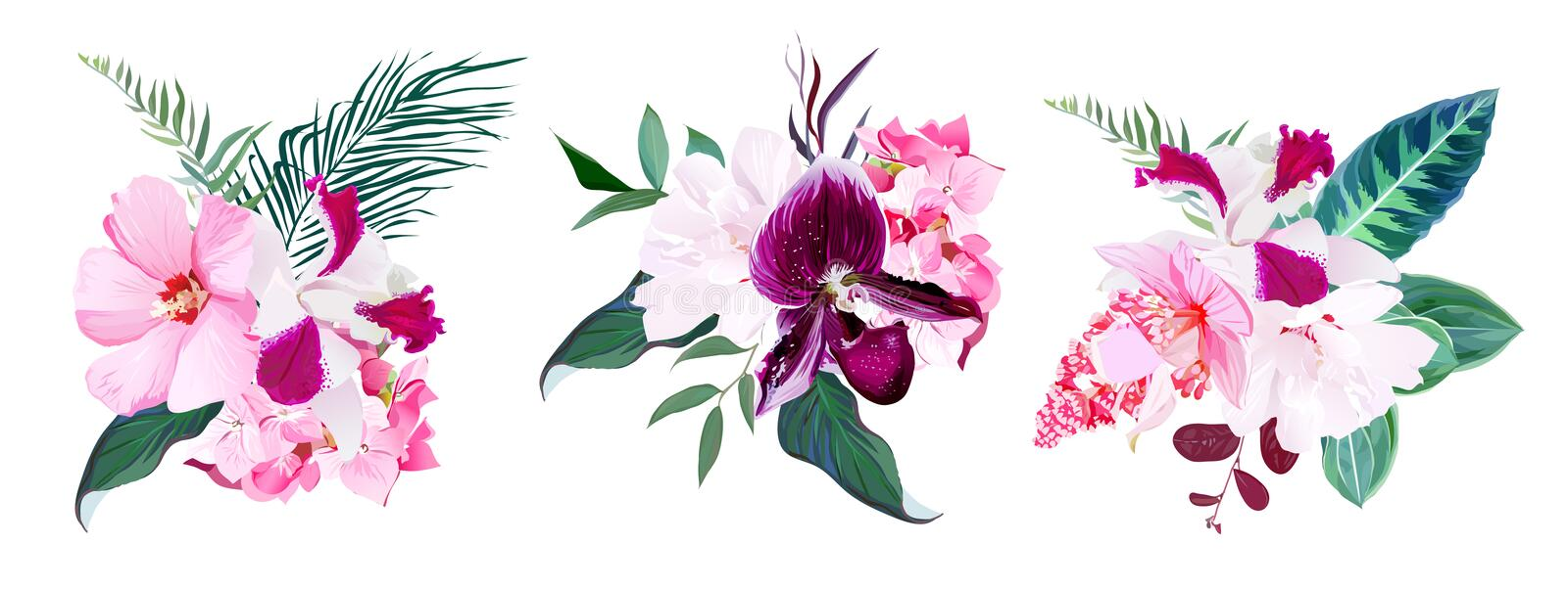 Exotic tropical floral bouquets of hibiscus, medinilla, paphiope vector illustration
