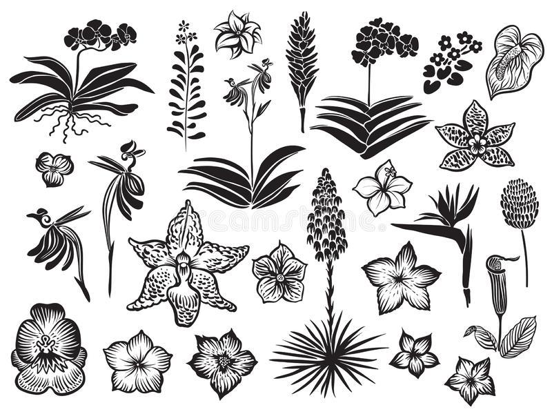 Exotic and tropical flowers black silhouette isolated on white background. Hand drawn vector blossom. Exotic and tropical flowers black silhouette isolated on vector illustration