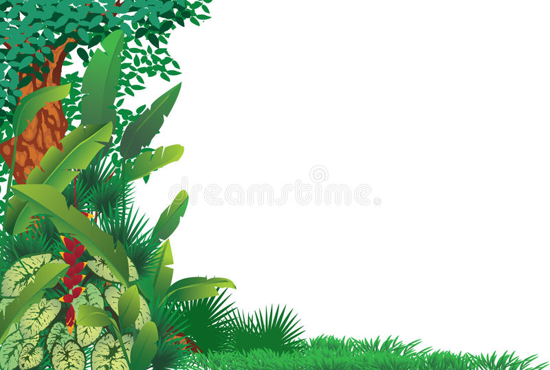 Exotic tropical forest stock illustration