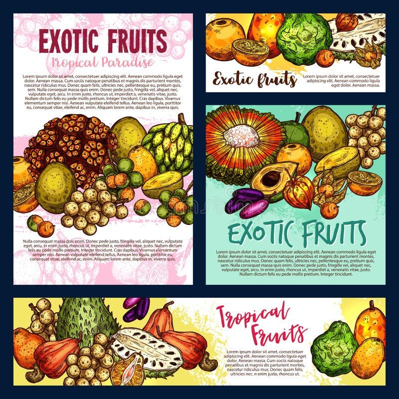 Exotic tropical fruitsand berries, vector sketch. Exotic tropical fruits, farm market design. Vector tangerine citrus, pandan or pandanus, physalis with longkong vector illustration