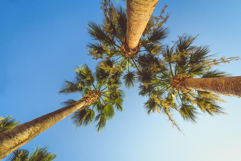 Exotic tropical palm trees at summer, view from bottom up to the sky at sunny day royalty free stock images