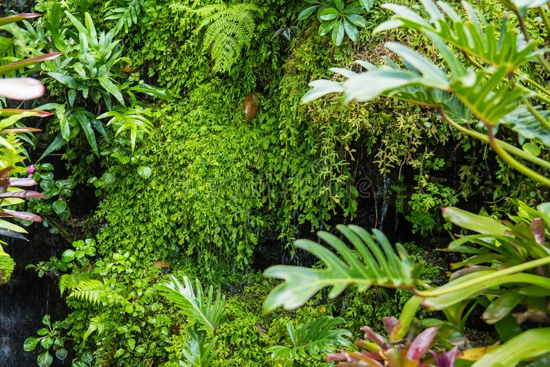 Exotic tropical plants wet forests are wet after rain.Thailand stock photography