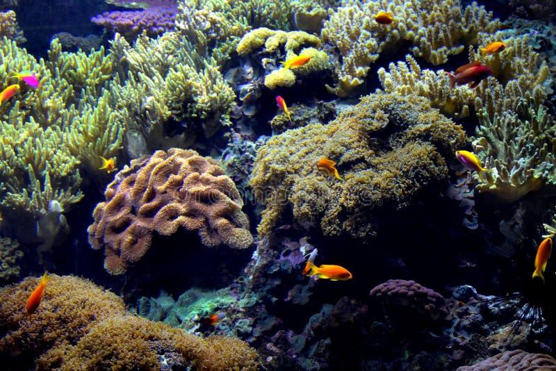 Download Exotic underwater sea life stock photo. Image of oceanarium - 28655400
