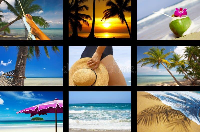 Exotisch lizenzfreie stockbilder