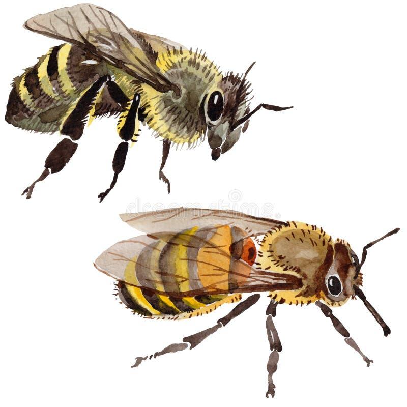Exotisch bijen wild insect in een geïsoleerde waterverfstijl stock illustratie