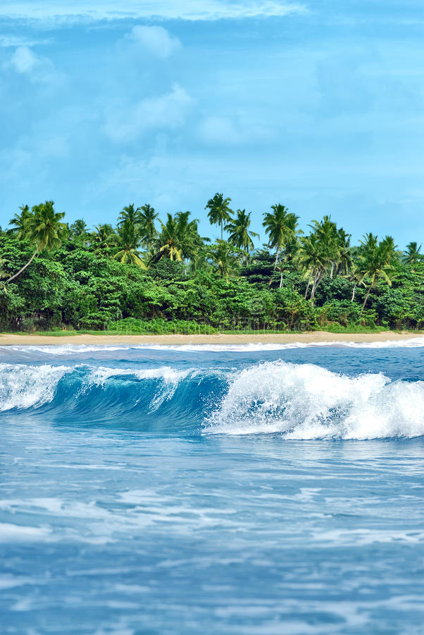 Exotisch eiland met palmen royalty-vrije stock afbeelding