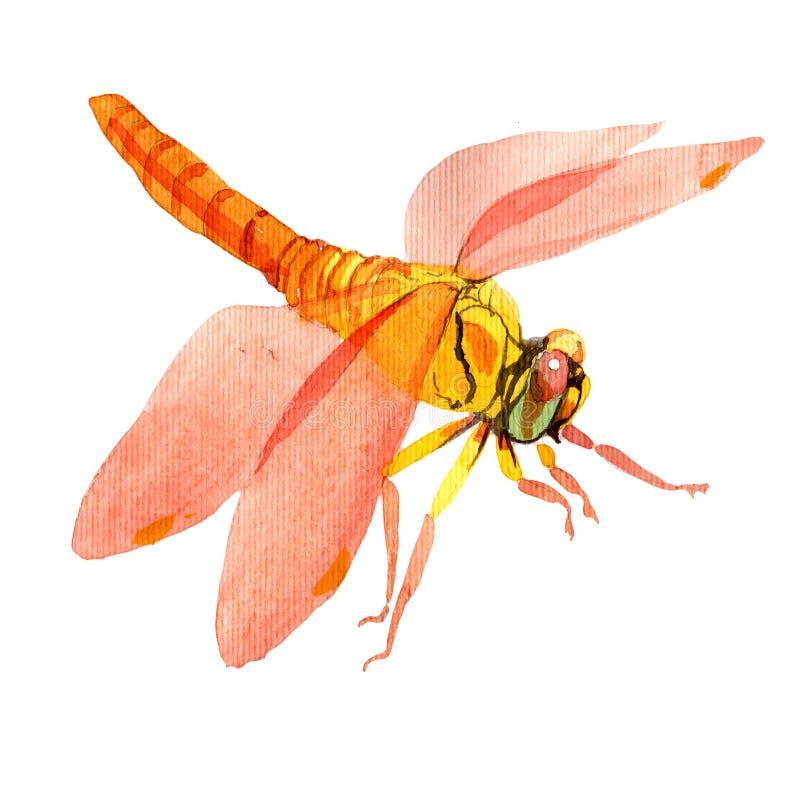 Exotisch libel wild insect in een geïsoleerde waterverfstijl vector illustratie
