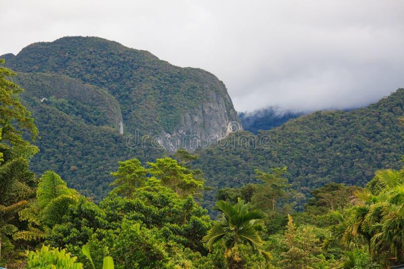 Exotisch regenwoudlandschap royalty-vrije stock afbeeldingen