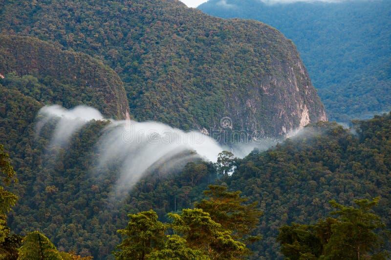 Exotisch regenwoudlandschap royalty-vrije stock foto
