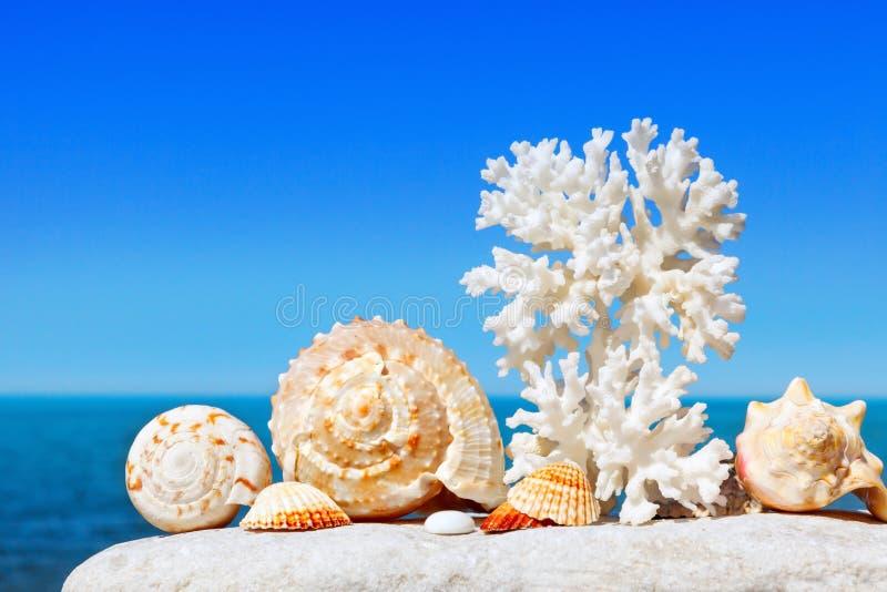 Exotisch shells en koraal op een achtergrond van het de zomeroverzees en de blauwe hemel Vakantie op zee royalty-vrije stock afbeelding