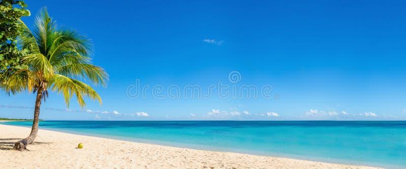 Exotisch strand met kokospalm, Caraïbische Eilanden royalty-vrije stock afbeeldingen