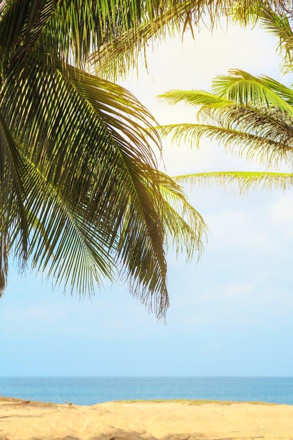 Exotisch strand met palmen op de kusten van de Indische Oceaan royalty-vrije stock afbeelding