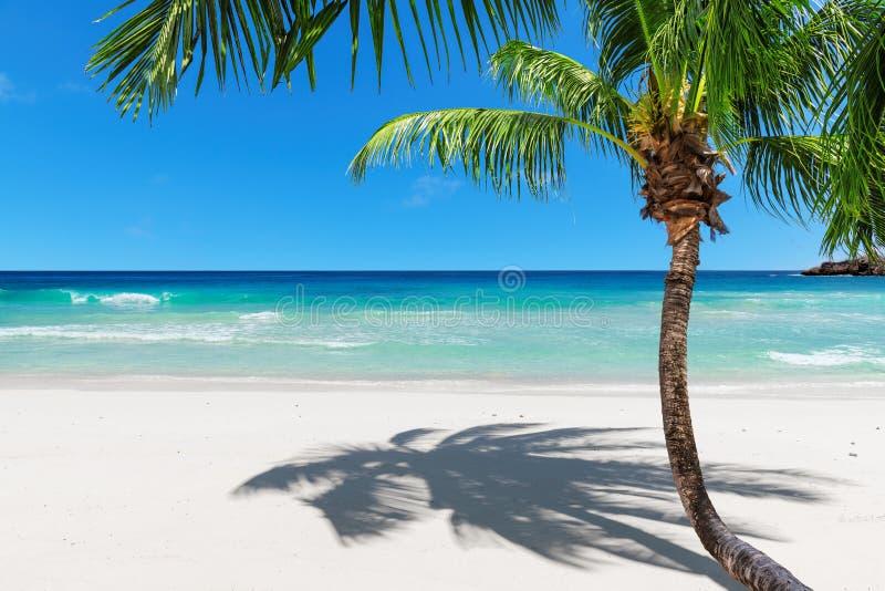 Exotisch zandig strand met cocopalm en turkooise overzees stock foto's
