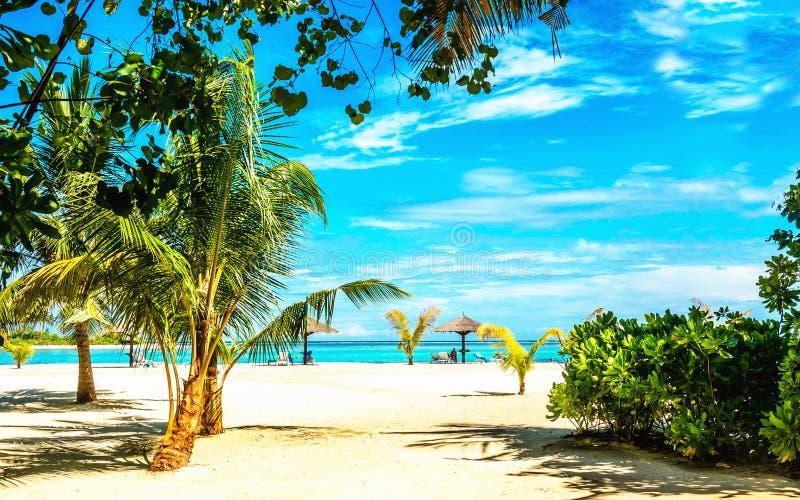 Exotisch zandig strandhoogtepunt van lange palmen stock afbeeldingen