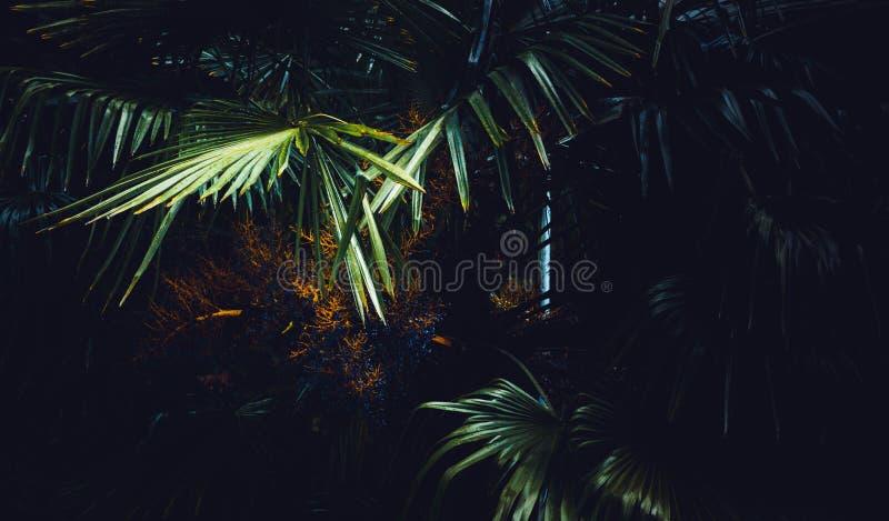 Exotische bladeren in een bos stock foto