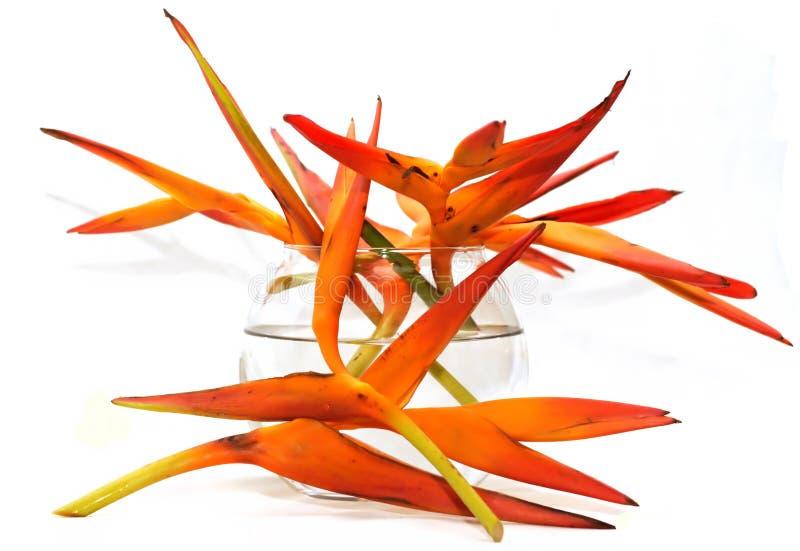 Exotische bloemen in de vaas stock foto