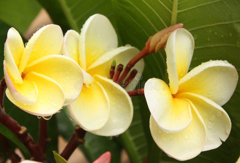 Exotische bloemen met waterdalingen stock afbeeldingen